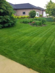 Vacation Lawn Care in Steinbach